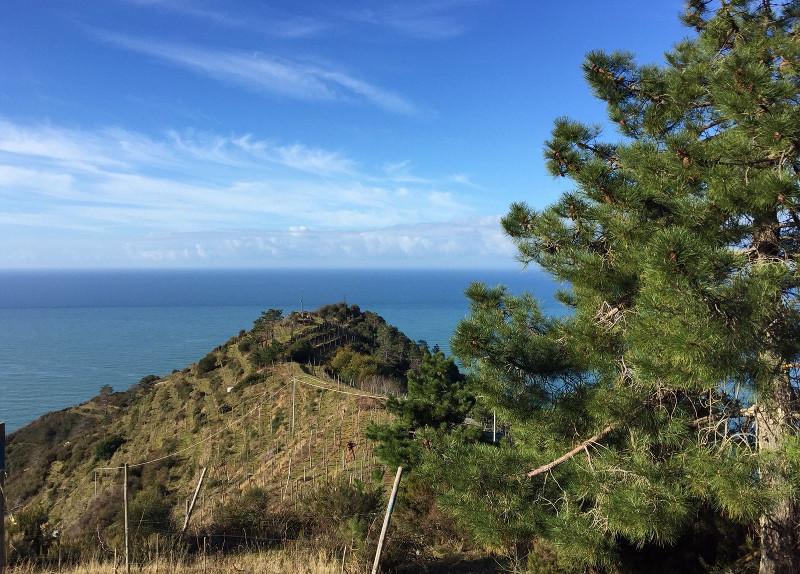 Veduta panoramica del Corniolo, tra Riomaggiore e Manarola
