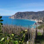 Monterosso: vista dall'ultimo tratto dello Sciacchetrail